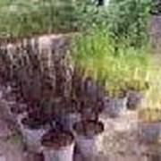 Саженцы, семена, продукция цветоводства фото