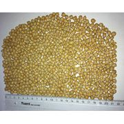 Выращиваем нут культурный семена нута турецкий горох бараний горох. фото