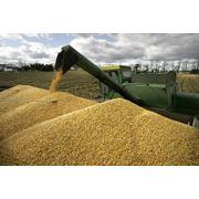 Зерно фуражное торговые поставки купить