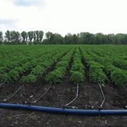 Увеличение аэрации почвы, применение Агрозина для аэрации фото