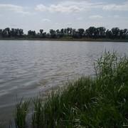 Рыболовно-охотничьи угодья Макоротники, рыбалка, охота.Рыбоводство фото