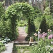 Подбор растений для сада. Озеленение сада. Благоустройство сада. Ландшафтный дизайн. Ландшафтный дизайн сада фото