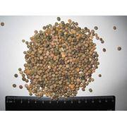 Вика семена. Зерновые бобовые и крупяные культуры фото