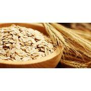 Продаем зерновые культуры: пшеница рожь кукурузу овес просо пшено рис сою рапс подсолнечник. фото
