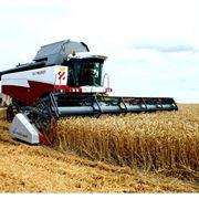 Закупаем пшеницу фото