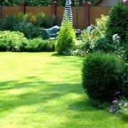 Озеленение сада,озеленение,озеленение сада в зимний период фото