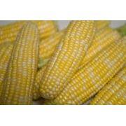 Посевная кукуруза. Поставки по Украине и на экспорт фото