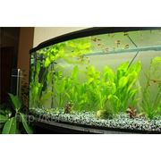 Установим аквариум фото