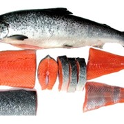 Рыба обработанная фото