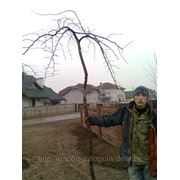фото предложения ID 532972