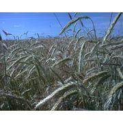 Семена сельхоз культур технологии их выращивания фото