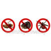 Устранение вредных грызунов и насекомых в квартирах, на предприятиях и на территриях