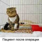 Содержание больных животных в стационарных условиях фото