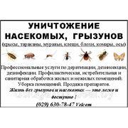 Шершни, клопы, тараканы, крысы, клещи, муравьи, осы, блохи,