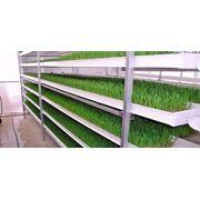 Гидропонная установка для проращивания зерна