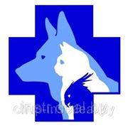Технические условия на ветеринарные препараты. Разработка ТУ фото