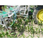 Культиватры для обработки кукурузы фото