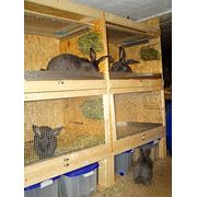 Клетки для кроликов клетки для кроликов купить куплю клетку для кролика клетки для кроликов цена клетки для содержания кроликов продажа клеток для кроликов продам клетки для кроликов промышленные клетки для кроликов где купить клетки для кроликов. фото