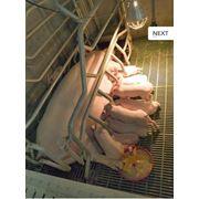 Поилки Оборудование для животноводства станки для опороса станки для осеменения