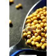 Семена масличных культуркупитьУкрана фото