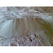 продам золу шелухи подсолнечника (пылеобразная) фото