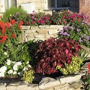 Создания клумб и цветников фото