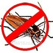 Вытравить тараканов с гарантией! фото