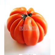 Триходермин БТ. Средство защиты томатов огурцов перца и других овощных зерновых и технических культур от различных заболеваний. фото