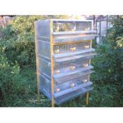 Клетки для перепелов Оборудование клеточное для птицеводства купить Украина  цена производителя фото