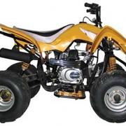Квадроцикл спортивный Kazuma Falcon 110 фото