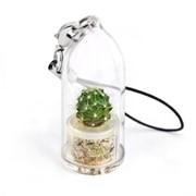 Грин Minicactus брелок с живым растением фото