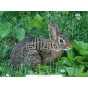 Крольчата фото
