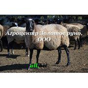 фото предложения ID 5460873