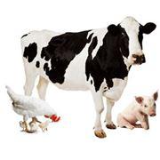 Антибактериальная подсыпка в животноводстве Добавки кормовые для животноводства Vitfoss Украина смеси витаминов в том числе в любом растворителе фото