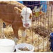 Расчеты рационов кормления молочных коров фото