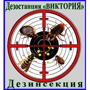 Дезинсекция, уничтожение насекомых, всех видов фото