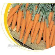 Семена моркови Престо F1 25000сем. фото