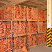 Овощехранилище 800 тонн Херсонская область, с.Борозенское. Аренда, продажа фото