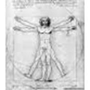 Исследование функционального состояния органов и систем организма. фото