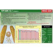 Семена кукурузы Пионер ПР39К13 ФАО 220 (Pioneer PR39К13) фото