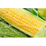 Семена кукурузы Пионер ПР38А79 фото