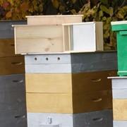 Набор инвентаря для начинающего пчеловода фото
