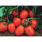 Семена томата Чибли 2500 сем. Сингента. фото