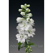 Delphinium elatum, дельфиниум культурный - Excalibur™, Сингента - 1000, 500, 250, 100 семян фото