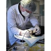 Ветеринарная стоматология фото