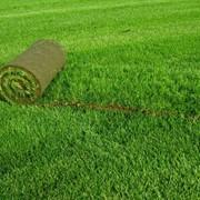 Укладка газонов фото