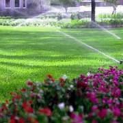 Полив сада, озеленение, ландшафтный дизайн. Киев фото