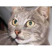 Кастрация котов фото