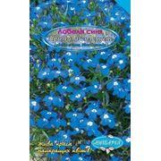 "Лобелія синя ""Примула спленденс"" (Lobelia erinus, Blue Cascade)"