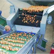 Машина Haith для фасовки овощей фото
